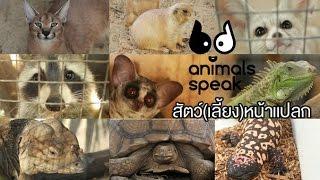 Animals Speak [by Mahidol] Exotic Pets…สัตว์(เลี้ยง)หน้าแปลก