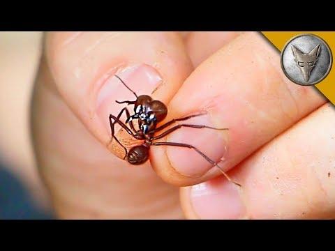 Flesh Ripping Ants?