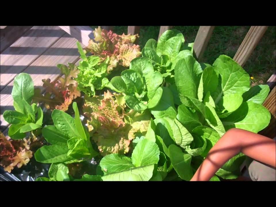 Rachael S City Pickers Garden Week 3 Update Part 1 Youtube