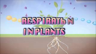 Download Video Respirasi Pada Tanaman MP3 3GP MP4