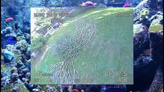 Scraggle Park with DEATHRAT   ImmersionRC Vortex 180 Taking Abuse  Relaxing Fish Tank