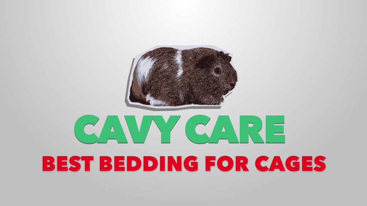 Top 5 Bedding Options for Guinea Pigs