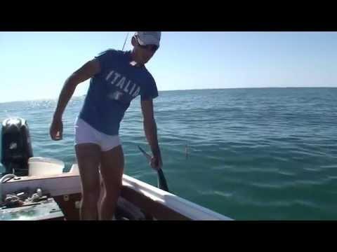 Leccia con il vivo dalla barca
