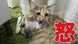 ちゃちゃが怒るとマジで怖い・・・。 thumbnail