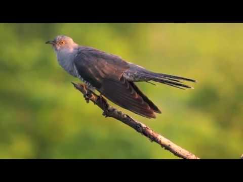 Burung Paling Jahat Sedunia Youtube