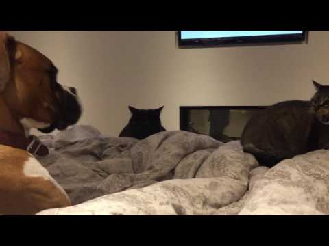 Dog Who Just Wants To Be Friends - Dog VS Cat Fail