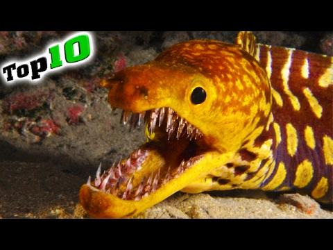 Top 10 - Die GEFÄHRLICHSTEN Tiere Der Welt!