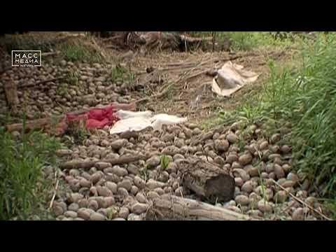 16 дворов подтопило в камчатском селе Парень | Новости сегодня | Происшествия | Масс Медиа