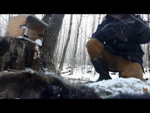 FISHER TRAPPING - They Came Back!!!