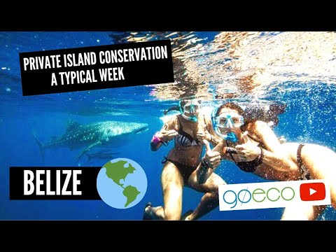 GoEco VOLUNTEER Trip Vlog - PRIVATE ISLAND Marine Conservation in Belize