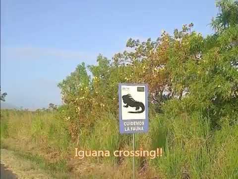 Punta Chame, Republic of Panama