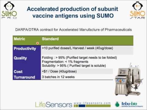 SUMO Protein Expression Systems