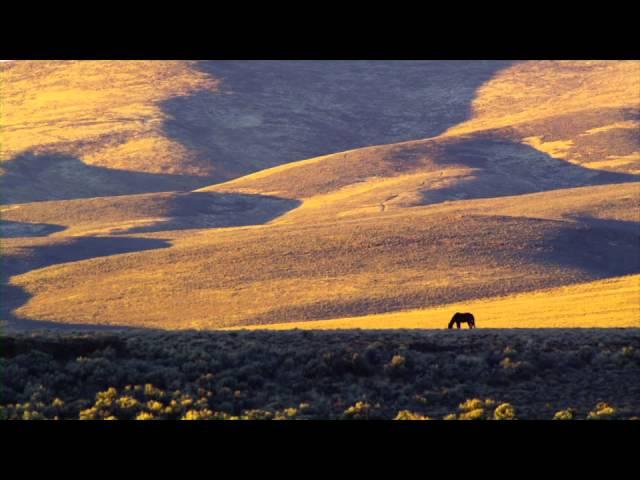 Lone Wild Horse, Sheldon Wildlife Refuge, Nevada