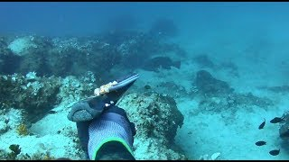 spearfishing adventures #26: spearfishing vacations '19