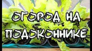 🌱 Огород на подоконнике, выращивание 🌿 зелени и салата на раз два три ✔️