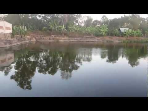 Trang trại Minh Hương chuyên cung cấp hươu giống nai giống nhung hươu nhung nai