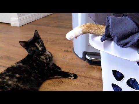 DO NOT DISTURB! - Cat Napping In Progress