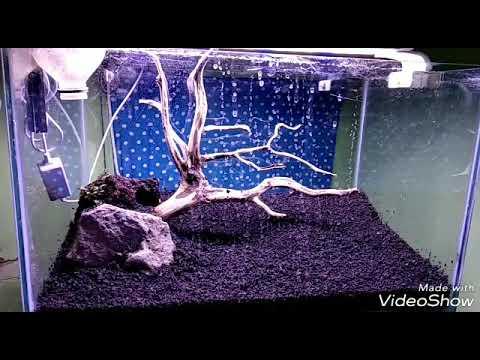 Tutorial membuat aquascape sederhana low budget - YouTube