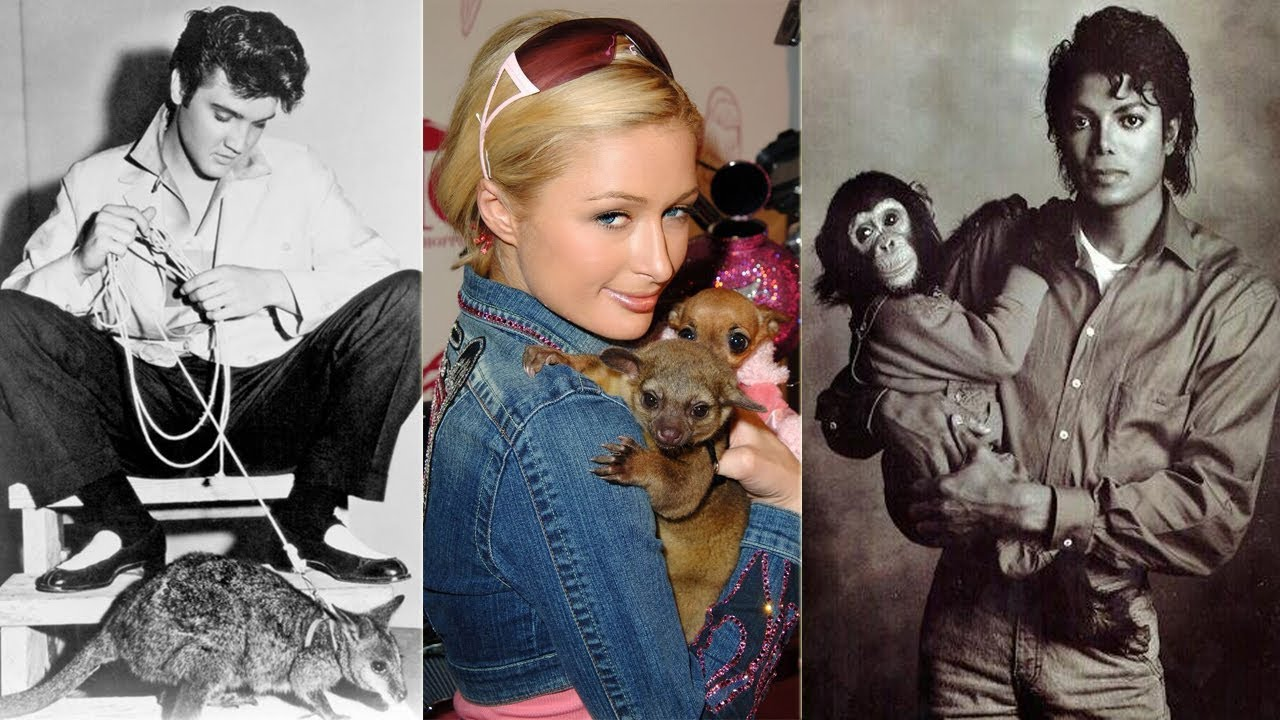 20 W-ild Animals That Celebrities Were Actually Cr-a-zy Enough To Keep As Pets