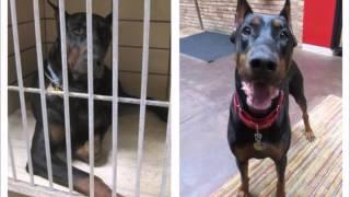 Удивительные преображения бездомных собак после того, как их приютили