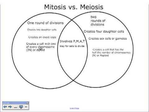 Worksheets Comparing Mitosis And Meiosis a comparison of mitosis and meiosis youtube meiosis