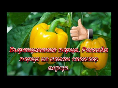 Вопрос: Как посеять семена перцев прямо в грунт в Ленобласти?