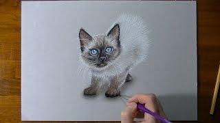 Thai kitten portrait