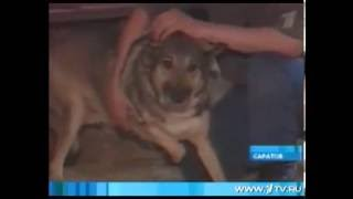 В Саратове закрывают приют для собак и кошек