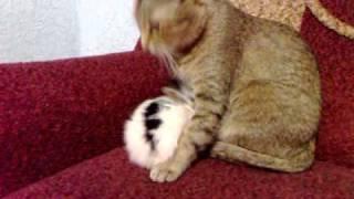 кошка умывает кролика.mp4