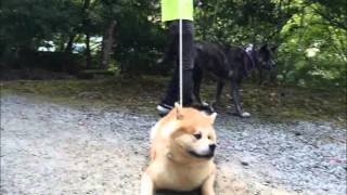 YouTubeでの収益は全て保護犬の為に使わせて頂きます 皆様方のご視聴が...