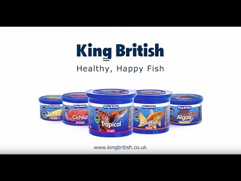 Why King British Fish Flake Food Is The Best For Fish