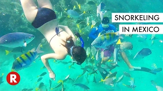 I've Never Seen So Many Fishes In My Life // Snorkeling in Cabo, Mexico