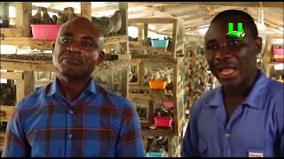 AYEKOO: Quail Farming