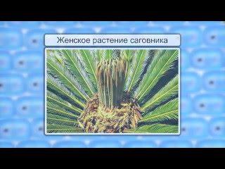 Размножение семенных растений. Видеоурок по биологии 6 класс