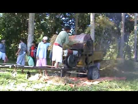 Rice Threshing 1