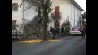 Sfaranda La Fine del Gelso Bianco Secolare Oggi 14.11.2013