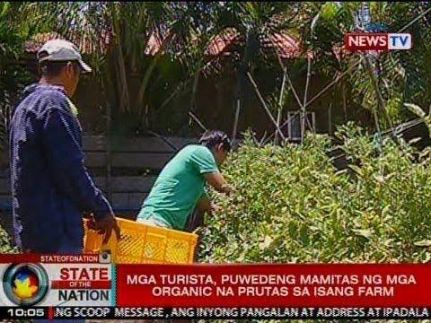 SONA: Mga turista, puwedeng mamitas ng mga organic na prutas sa isang farm