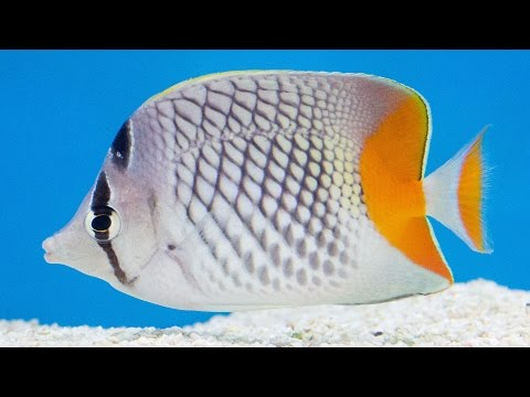 Revisiting Jan's Tropical Fish!