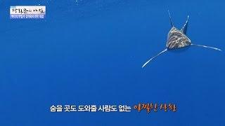 바다수영하다 마주친 상어! 그의 대처방법은? [광화문의 아침] 309회 20160902