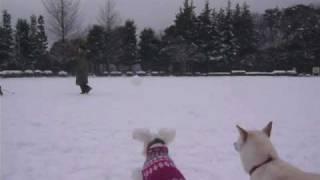 雪遊び。雪の日の広場にて喜ぶ犬たちの様子。 ☆ http://blog.goo.ne.jp/...