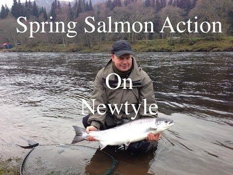 Superb Salmon Fishing On The River Tay's Newtyle Beat.