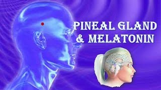 The Pineal Gland And Melatonin