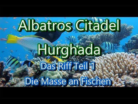 Azur Demoiselle - azure damselfishиз YouTube · Длительность: 1 мин34 с