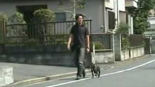 犬しつけ DVD http://bit.ly/24B4RGj 森田流犬のしつけマニュアルとDVD...