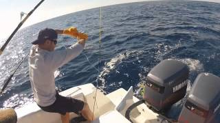 WAHOO TROLLING ABOARD THE JUST THE TIP