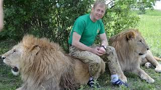 Львы принимают участие в съемке  фильма. Тайган.Крым
