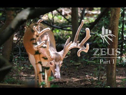 Suburban Bowhunter | Zeus: part 1