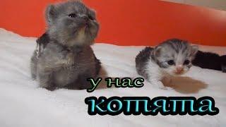 Наша КОШКА РОДИЛА КОТЯТ/ТЯЖЕЛЫЕ РОДЫ/ СКОЛЬКО КОТЯТ? Cat baby Shower СМЕШНЫЕ КОТЯТА