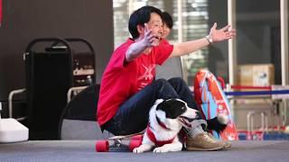 SunnySideDogs × EZYDOG コラボイベント、ドッグダンスショー&体験会の...