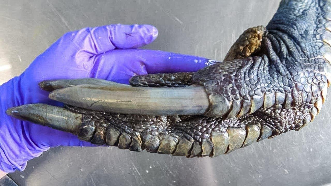 العلماء اكتشفوا حيوان مرعب عاش مع الديناصورات , ومازال موجود حتى يومنا هذا.  - نشر قبل 2 ساعة